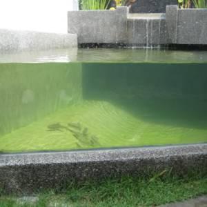 33.04mm Toughened Triple Laminated Carp Pond Window